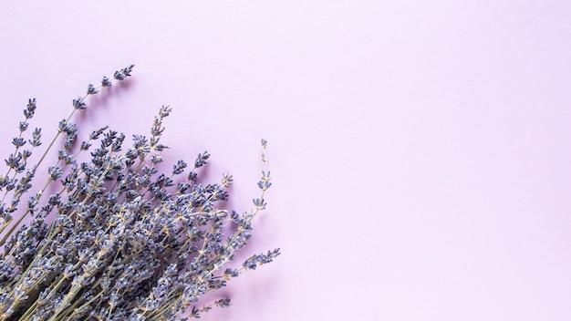 Fiori secchi di lavanda sulla viola