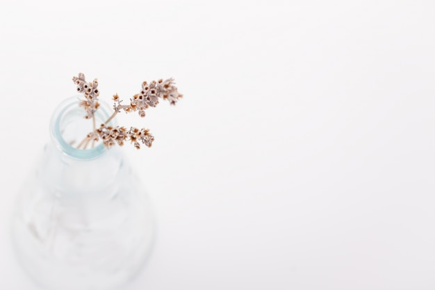 Fiori secchi in un vaso