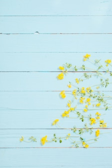 Fiori selvaggi gialli su fondo di legno blu