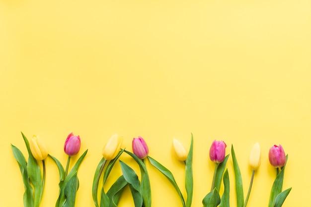 Fiori variopinti decorativi del tulipano su una priorità bassa