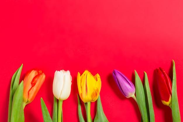 Fiori variopinti dei tulipani su fondo rosso
