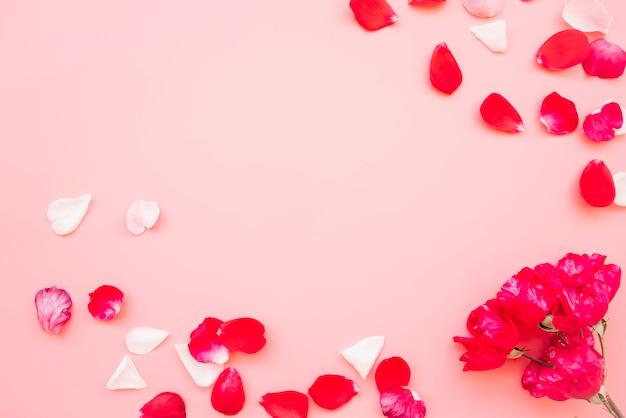 Fiori vicino mucchio di petali rossi