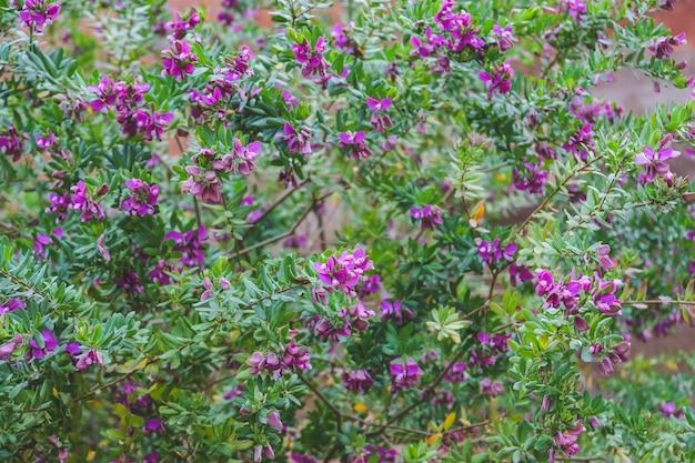 Fiori viola con polline bianco e piccole foglie verdi.