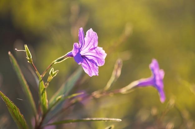 Fiori viola con sfondo verde