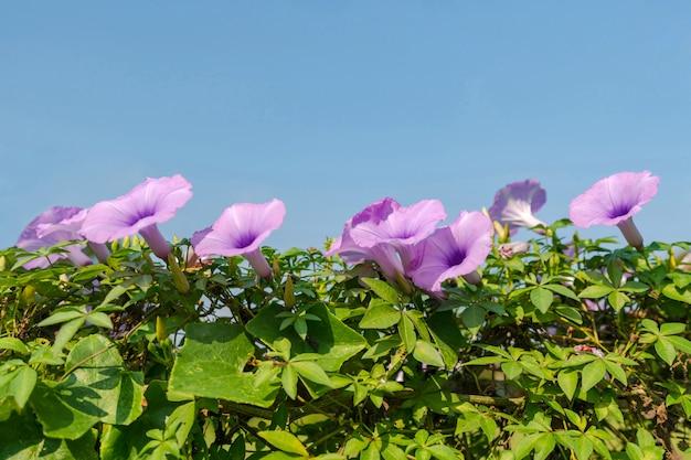 Fiori viola sotto il cielo blu