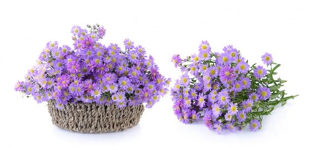 Fiori viola su sfondo bianco