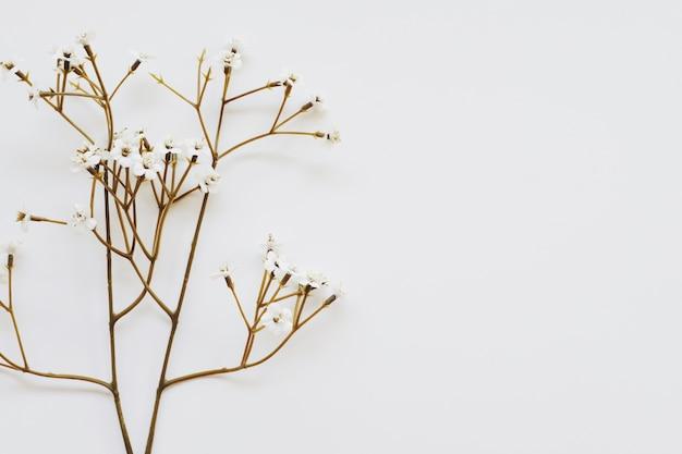 Fiorisca su fondo bianco rustico per progettazione di lavoro creativo.