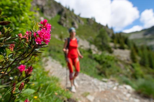 Fiorisce rododendri sul sentiero mentre passa una ragazza durante un'escursione