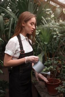 Fiorista che innaffia la pianta d'appartamento da un annaffiatoio