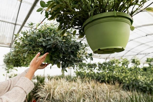 Fiorista del primo piano che organizza i vasi da fiori