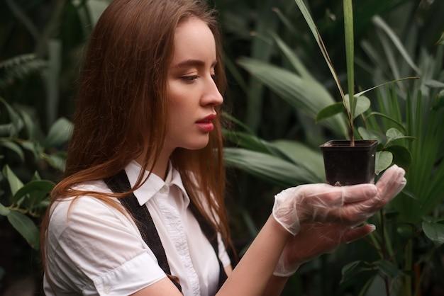Fiorista femminile lavora con pianta d'appartamento in vaso