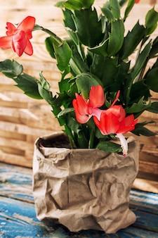Fioritura di piante ornamentali