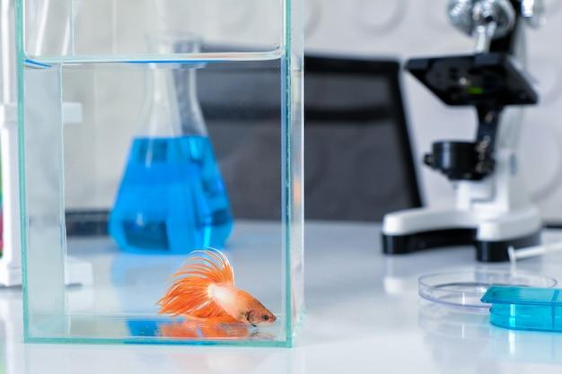 Fish thailand betta fish con ricerca scientifica.