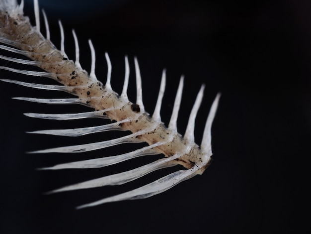 Fishbone sullo sfondo nero.