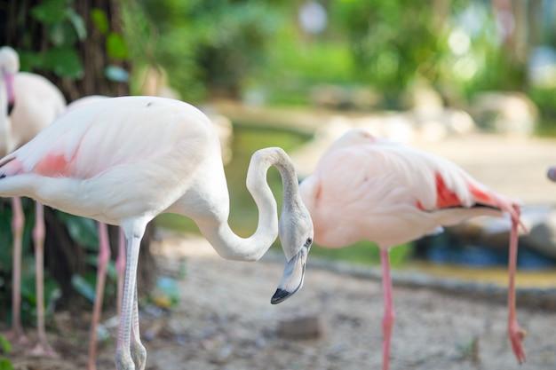 Flamingo natural backgrounds, evening light sunshine
