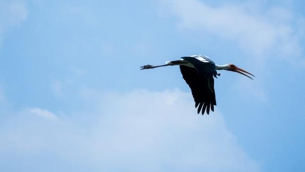 Flamingo volare nel cielo
