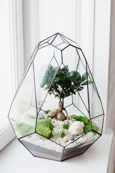 Florarium - composizione di piante grasse, pietra, sabbia e vetro, elemento di interni, decorazioni per la casa, terarium in vetro