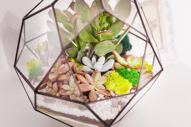 Florarium, composizione di piante grasse, pietra, sabbia e vetro, elemento di interni, decorazioni per la casa, terarium in vetro