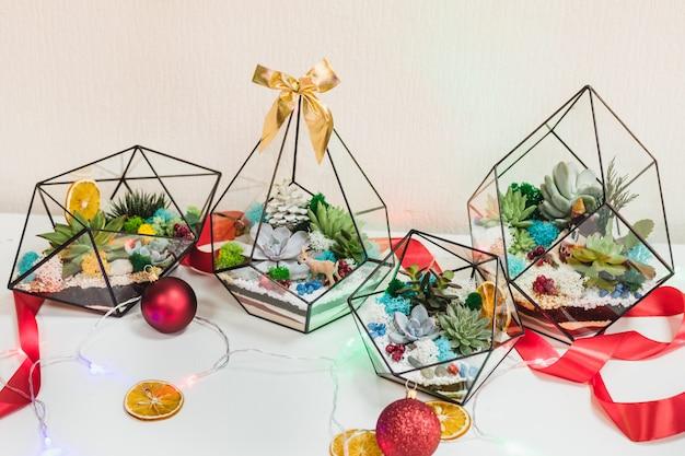 Florarium - composizione di piante grasse