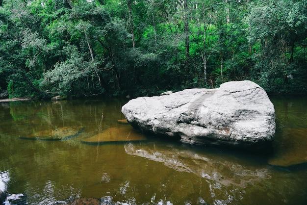 Flusso del fiume della montagna dalla giungla della foresta pluviale dell'albero della pianta verde della natura della cascata