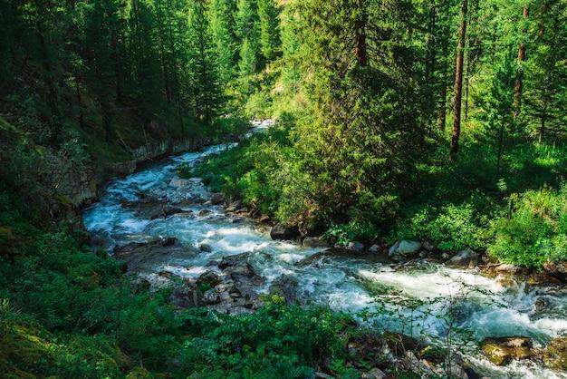 Flusso serpentino veloce nel torrente di montagna selvaggia nella valle