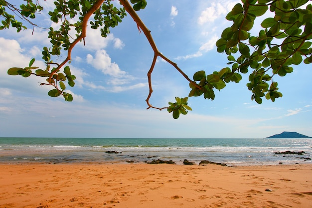 Fogli dell'albero sopra la spiaggia di lusso