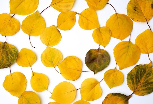 Fogli dell'albicocca secchi gialli su una priorità bassa bianca