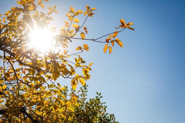 Fogli di autunno con cielo blu