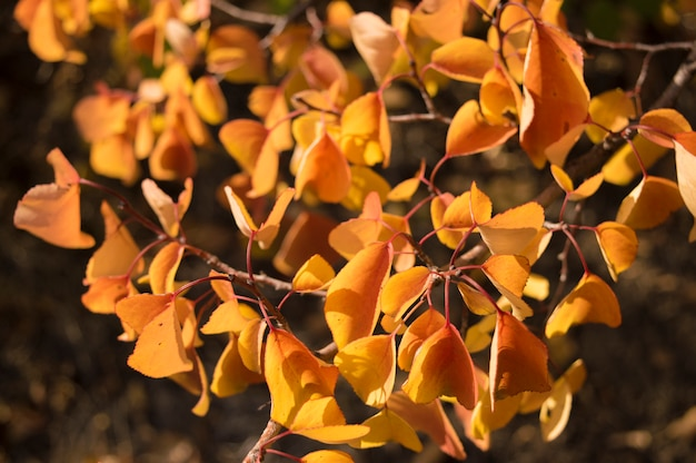 Fogli di autunno giallo arancione su una filiale