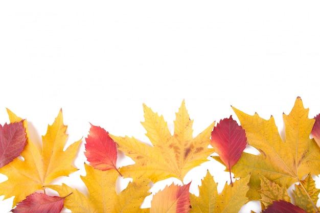Fogli di autunno rossi ed arancioni isolati su un bianco