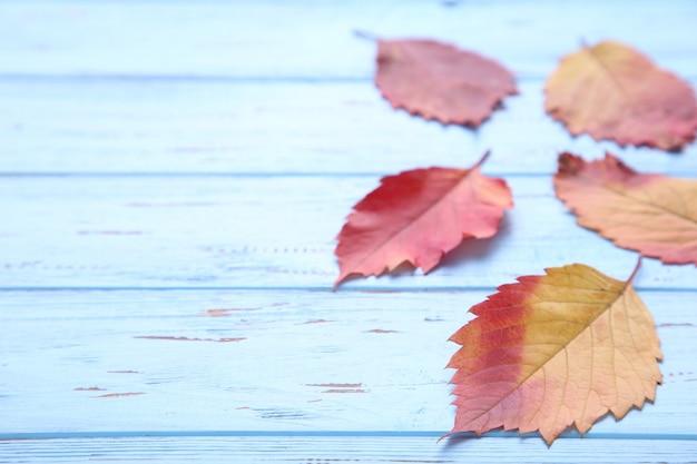 Fogli di autunno rossi ed arancioni su una tabella blu