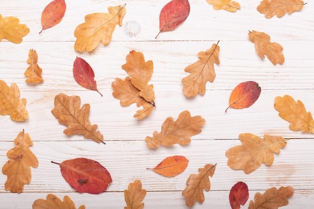 Fogli di autunno su una priorità bassa di legno bianca. vista piana, vista dall'alto, copia spazio.