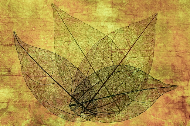 Fogli di autunno trasparenti astratti