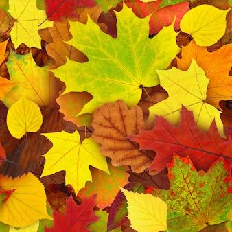 Fogli di autunno variopinti sulla terra