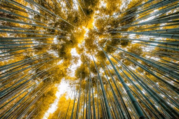Fogli dorati del bambù alla foresta