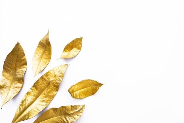 Fogli dorati dell'alloro asciutto isolati su priorità bassa bianca