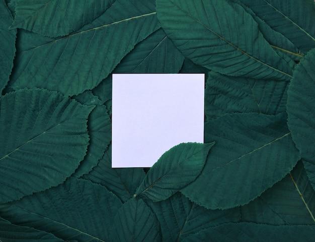 Foglia bianca vuota tra le foglie verdi di castagno