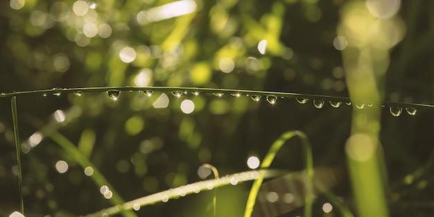 Foglia con gocce d'acqua su di esso in un giardino sotto la luce del sole con uno sfondo sfocato