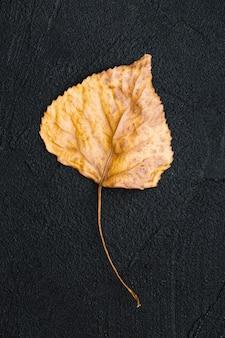 Foglia d'autunno del primo piano