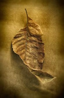 Foglia d'autunno secca