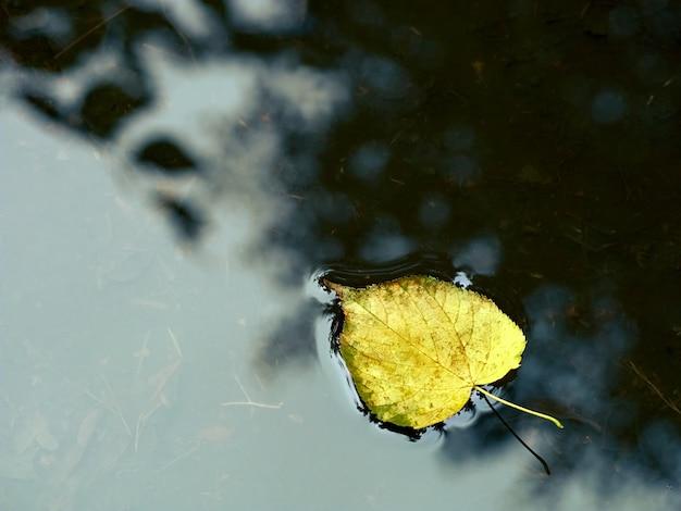 Foglia d'autunno sull'acqua.