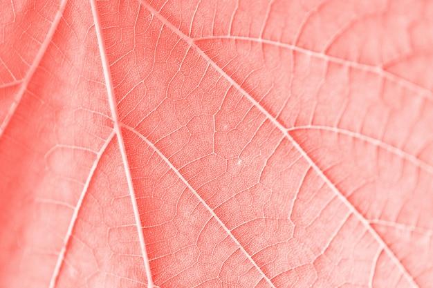 Foglia d'uva, colore rosa tonica, macro. chiuda su struttura con lo spazio della copia per progettazione.