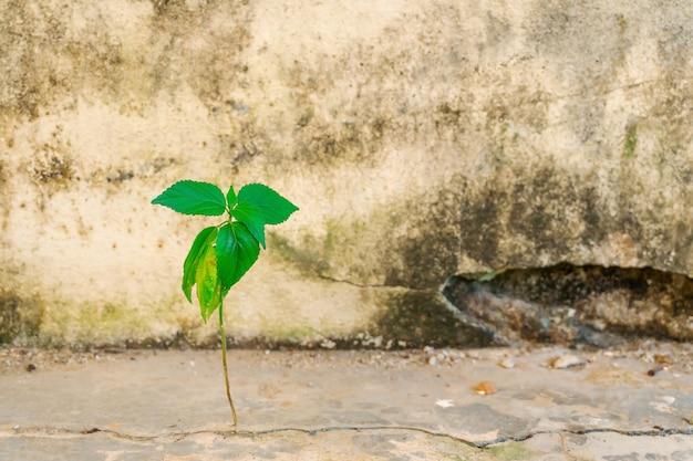 Foglia dell'albero che cresce sul calcestruzzo della crepa del cemento
