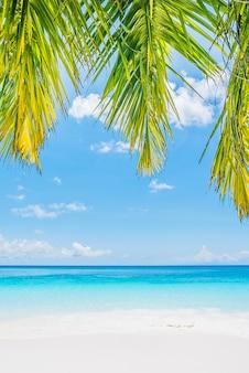 Foglia dell'albero di palma da cocco