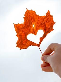 Foglia di acero arancio con cuore tagliato in primo piano femminile della mano