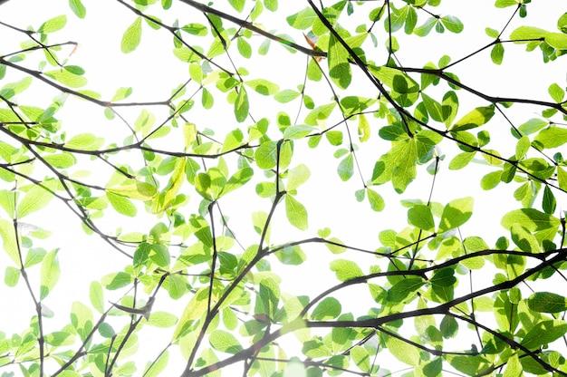 Foglia di albero dalla natura usa come sfondo, concetto di eco
