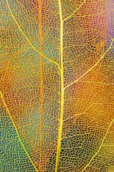 Foglia di autunno del primo piano con le vene gialle