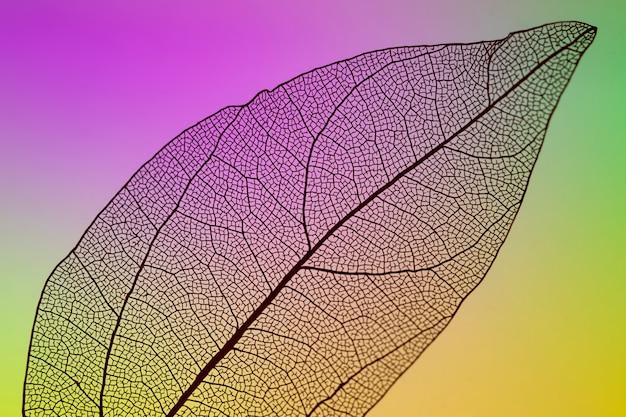 Foglia di autunno trasparente con sfondo vivido