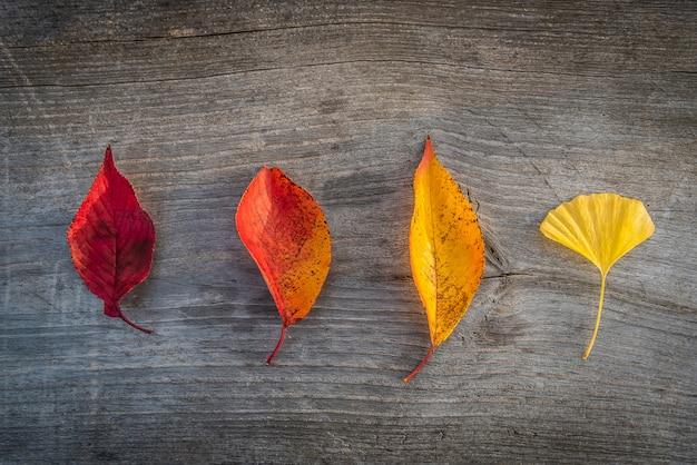 Foglia di autunno variopinto sul fondo della tavola in legno.