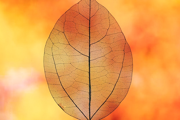 Foglia di caduta arancione trasparente astratta